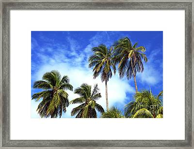 Palms Framed Print by John Rizzuto