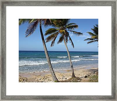 Palms Framed Print