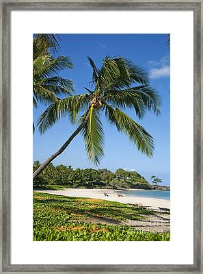 Palms Over Beach Framed Print by Ron Dahlquist - Printscapes