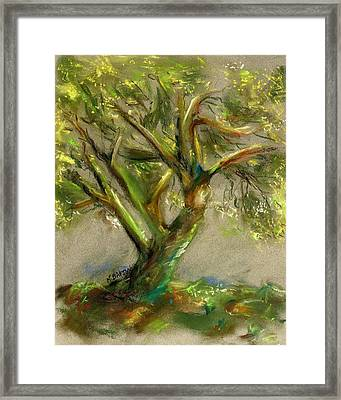 Palo Verde Framed Print by Marilyn Barton