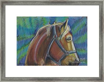 Palomino  Drawing Framed Print by Jamey Balester