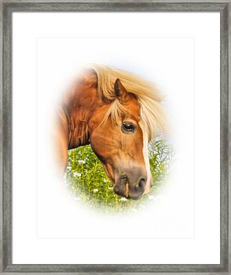 Framed Print featuring the photograph Palomino Head by Debbie Stahre