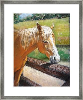 Palomino Horse Portrait Framed Print