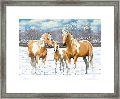 Palomino Paint Horses In Winter Pasture Framed Print by Crista Forest