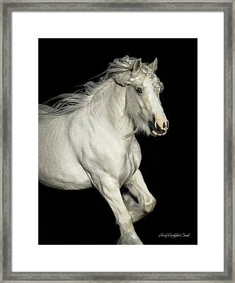 Palomino Portrait Framed Print by Terry Kirkland Cook