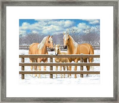 Palomino Quarter Horses In Snow Framed Print