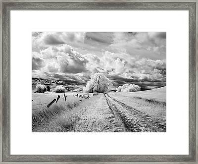 Palouse Road And Tree Ir 0996 Framed Print