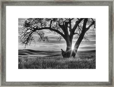 Palouse Sentinel - Black And White Framed Print