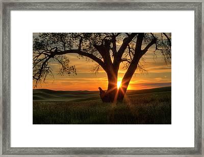 Palouse Sentinel Framed Print by Mark Kiver