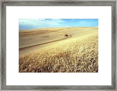 Palouse Wheat Framed Print by USDA and Photo Researchers