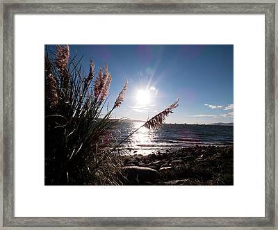 Pampas By The Sea Framed Print