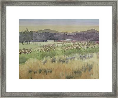 Pampas Grass Framed Print by Bethany Lee