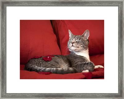 Pampered Pet Framed Print by Mandy Wiltse