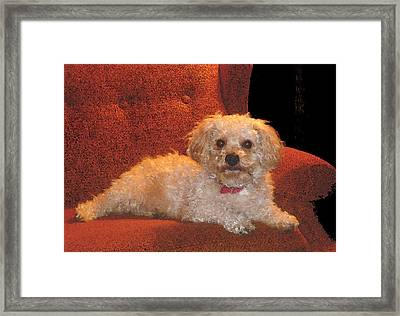 Framed Print featuring the photograph Pampered Pooch  by Margie Avellino