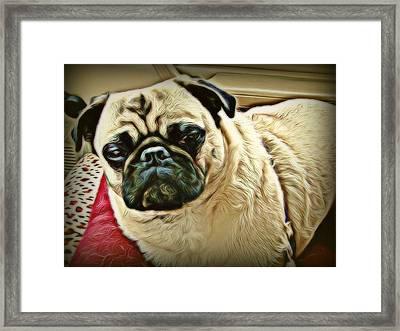 Pampered Pug Framed Print