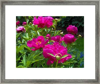 Pam's Perfect Peonies Framed Print