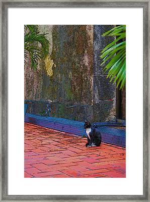 Panama Cat Framed Print by Robert Boyette
