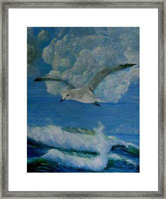 Panama City Seagull Framed Print