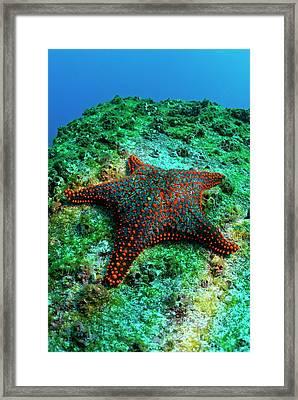 Panamic Cushion Star Framed Print by Sami Sarkis