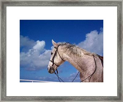 Pancho Framed Print by Mary-Lee Sanders