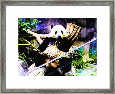 Panda Bear 1 Framed Print
