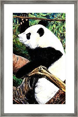 Panda Bear Framed Print by John Keaton