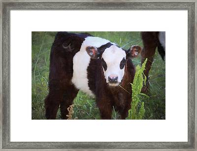 Panda Face Framed Print by Donna Kennedy