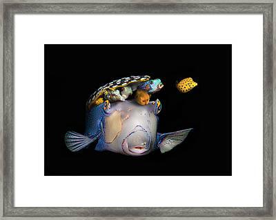 Pandora's Box Fish Framed Print by Dray Van Beeck