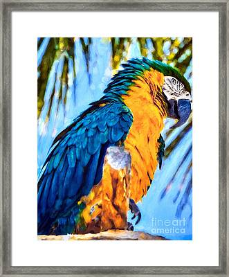 Panhandle Parrot Framed Print by Mel Steinhauer