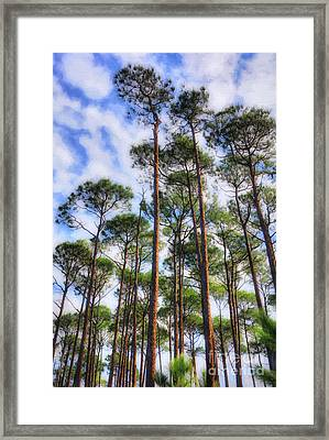 Framed Print featuring the photograph Panhandle Pines by Mel Steinhauer