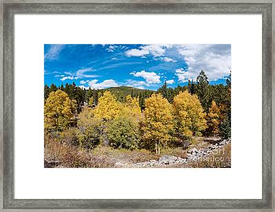 Panorama Of Fall Foliage Aspens In Colorado - Arapaho National Forest - Peak To Peak Highway Framed Print