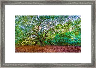 Panoramic Angel Oak Tree Charleston Sc Framed Print