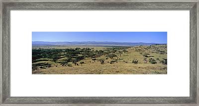 Panoramic Landscape Of Lewa Framed Print