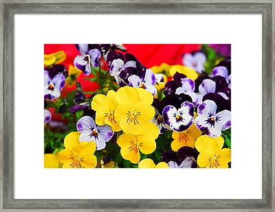 Pansies And Red Cart Framed Print