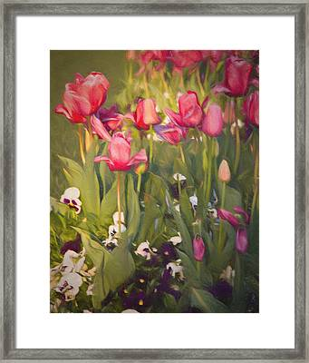 Pansies And Tulips Framed Print by Lana Trussell