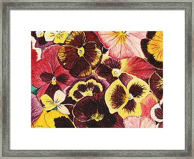 Framed Print featuring the painting Pansies Competing For Attention by Shawna Rowe