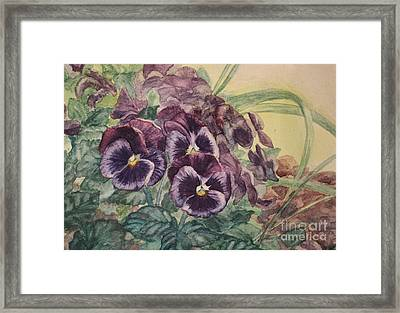 Pansies In Nature Framed Print