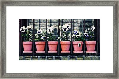 Pansies On The Window Ledge Framed Print by Sarah Loft