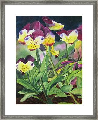 Pansies Framed Print by Sharon Farber