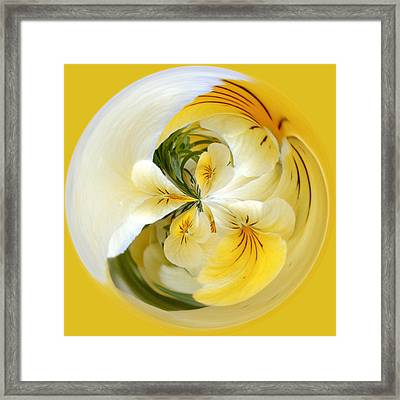 Pansy Ball Framed Print by James Steele