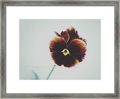 Framed Print featuring the photograph Pansy Face by Karen Stahlros