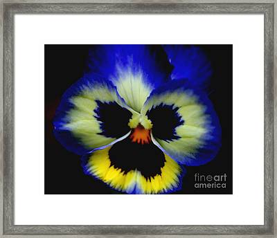 Pansy Face Framed Print by Smilin Eyes  Treasures