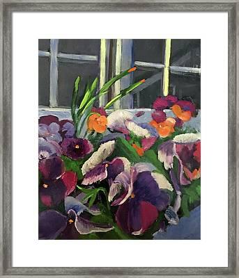 Pansy Frenzy Framed Print