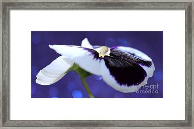 Pansy Jewel Framed Print by Krissy Katsimbras
