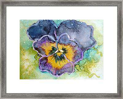 Pansy Framed Print by P Maure Bausch