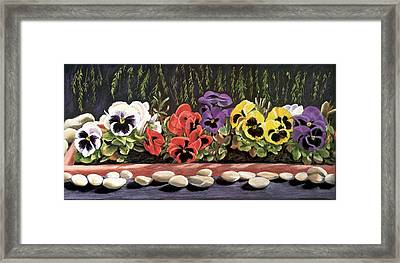 Pansy Palette Framed Print by Vanda Luddy