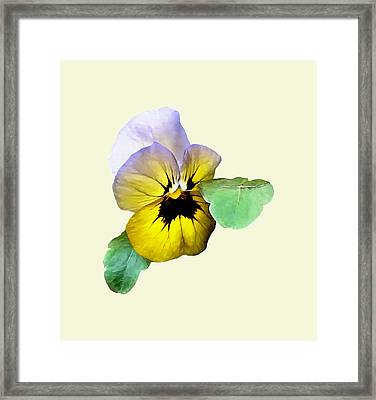 Pansy Saluting Framed Print