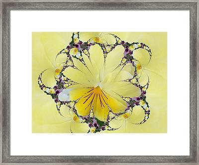 Pansy Swirls Framed Print
