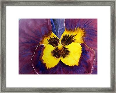 Pansy Framed Print by Tina Storey