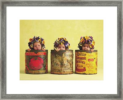 Pansy Tins Framed Print by Anne Geddes